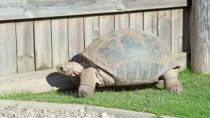 Illustration : Quel enclos ou terrarium choisir pour sa tortue terrestre ?