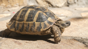 Illustration : Quelle tortue choisir ?