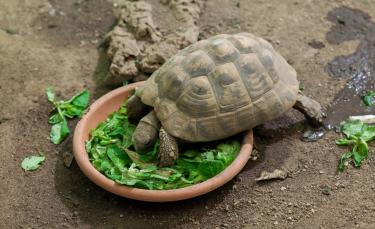 """Illustration : """"Nourrir une tortue"""""""