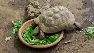 Illustration : Nourrir une tortue