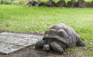 """Illustration : """"Les maladies courantes de votre tortue"""""""