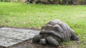 Illustration : Les maladies courantes de votre tortue
