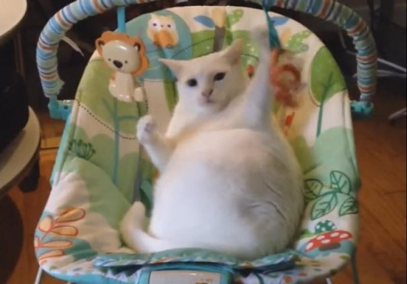 """Illustration : """" Une chose est sûre : cette chatte adore les jouets de bébé"""""""