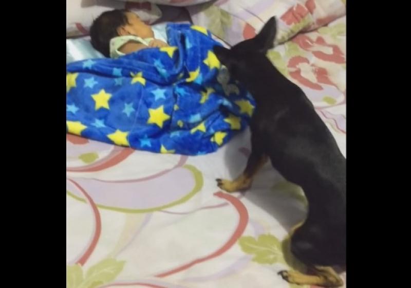 """Illustration : """" Cette chienne est la nounou parfaite pour un bébé"""""""