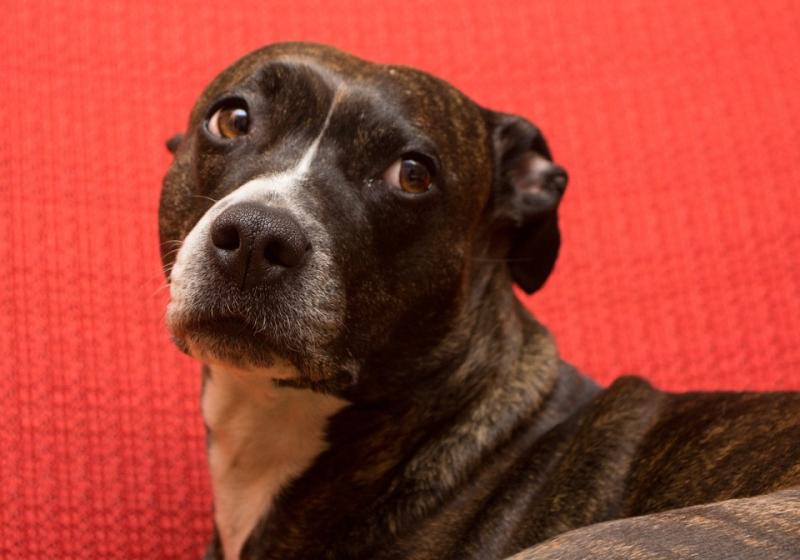 """Illustration : """"Narbonne (11) : Un chien abandonné au milieu de ses excréments"""""""
