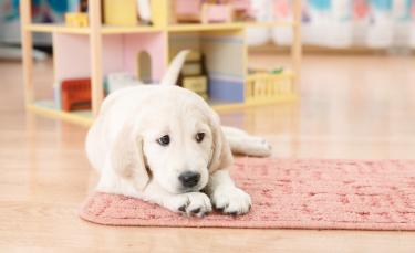 """Illustration : """"Jouer avec son chien en intérieur"""""""
