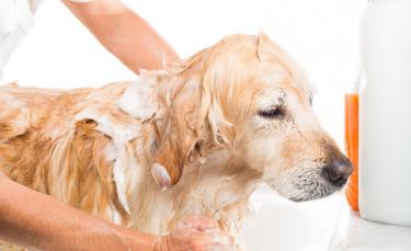 """Illustration : """"Donner le bain à un chien"""""""
