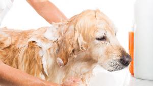 Illustration : Donner le bain à un chien