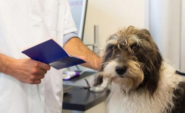 """Illustration : """"Le passeport pour chien"""""""