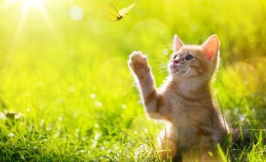 """Illustration : """"Protéger son chat de la chaleur"""""""