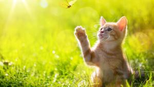 Illustration : Protéger son chat de la chaleur