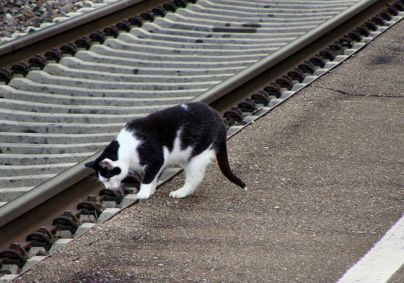 "Illustration : ""Un chat prend le train de Paris tout seul, direction la Normandie"""