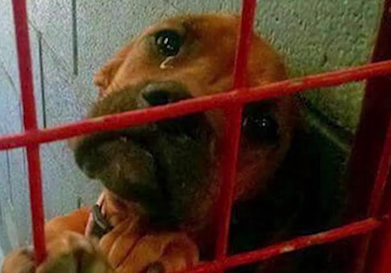 """Illustration : """"Une simple photo permet à un chien de retrouver une famille adoptive"""""""