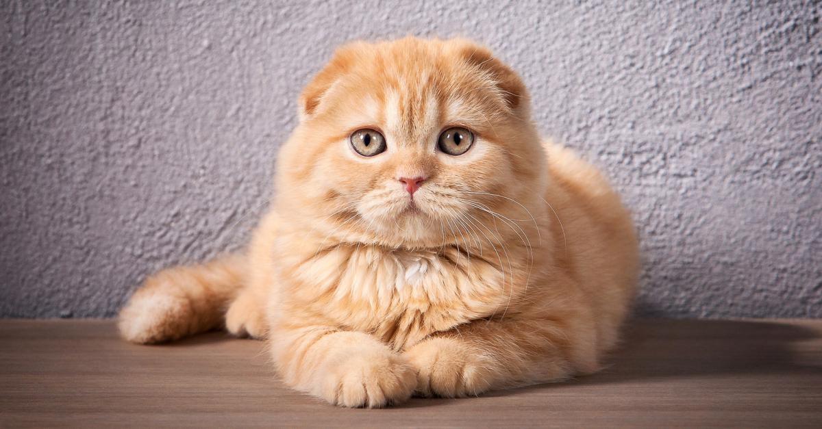 Cancer et tumeurs chez votre chat : prévention, symptômes ...