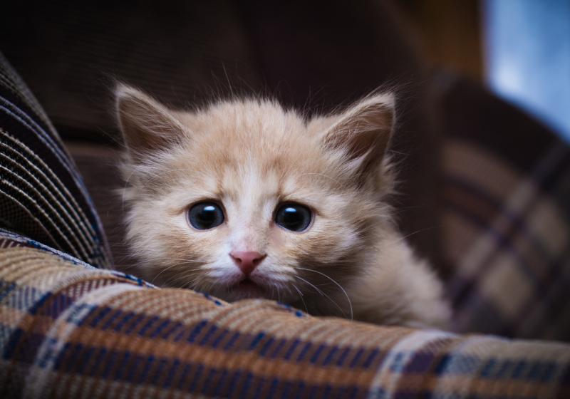 """Illustration : """"8 ans après sa disparition, un chat retrouve ses propriétaires"""""""