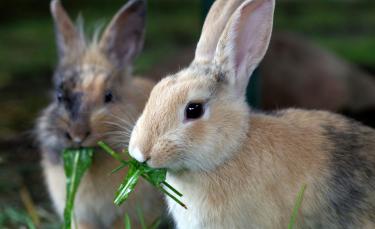 """Illustration : """"Que mange un lapin ?"""""""