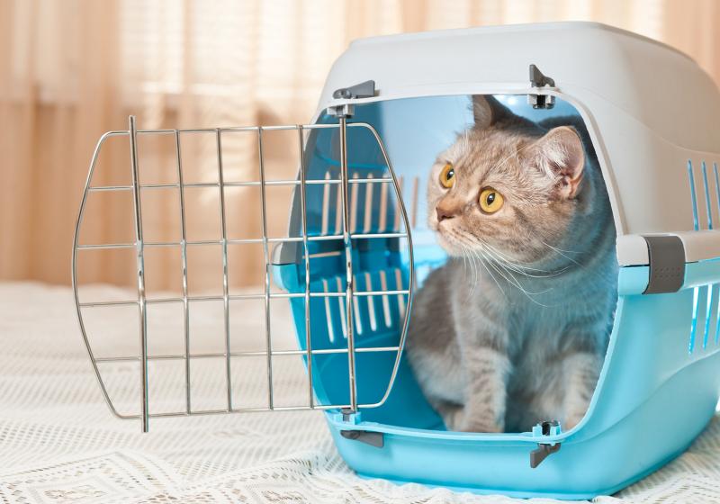 """Illustration : """"Comment voyager avec son chat en voiture ?"""""""