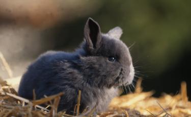 """Illustration : """"Choisir une litière pour son lapin"""""""