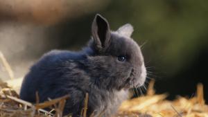 Illustration : Choisir une litière pour son lapin