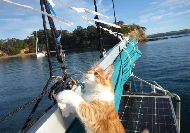 """Illustration : """"Skatty, ce chat qui dompte la mer avec son propriétaire sourd"""""""