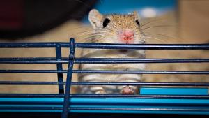 Illustration : Choisir une litière pour sa souris