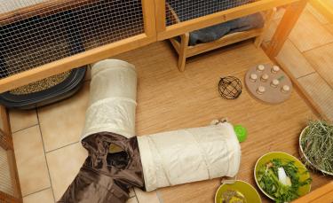 """Illustration : """"Les accessoires indispensables pour la cage du lapin"""""""