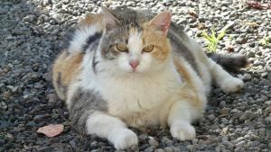 Illustration : Obésité des animaux de compagnie : un constat alarmant