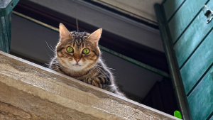 Illustration : Condamné pour avoir jeté un chat par la fenêtre