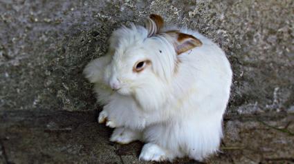 Illustration : Des lapins abandonnés dans un fossé secourus à temps !