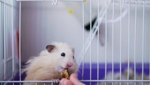 Illustration : Que mange un hamster ?