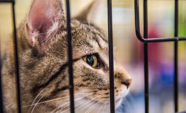 """Illustration : """"Adopter un chat dans un refuge"""""""