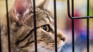 Illustration : Adopter un chat dans un refuge