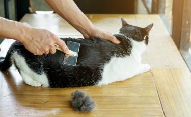 """Illustration : """"L'entretien du poil de son chat"""""""