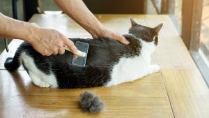 Illustration : L'entretien du poil de son chat