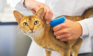 "Illustration : ""L'identification du chat"""