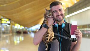 Illustration : Comment voyager avec son chat en avion ?