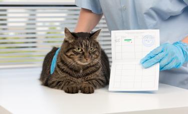 """Illustration : """"Le passeport pour chat"""""""