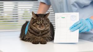 Illustration : Le passeport pour chat