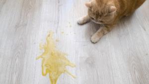 Illustration : Les vomissements du chat