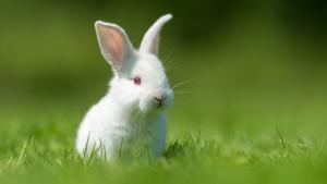 Illustration : Le langage corporel du lapin
