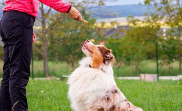 """Illustration : """"Récompenser son chien"""""""
