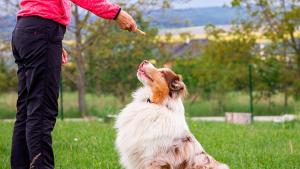 Illustration : Récompenser son chien