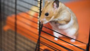 Illustration : Le langage du Hamster