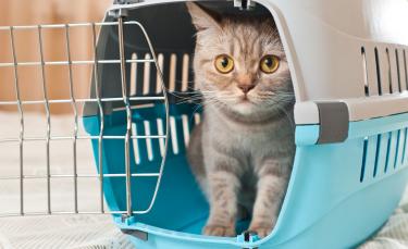 """Illustration : """"Le chat et le déménagement"""""""