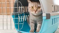 Illustration : Le chat et le déménagement