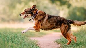 Illustration : Choisir un collier GPS pour chien