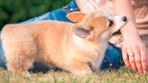 Illustration : Comment réagir en cas de morsure de chien ?