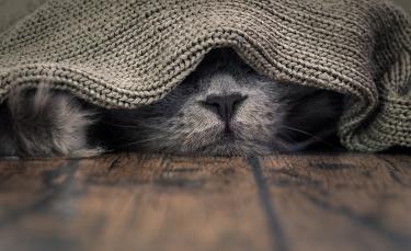 "Illustration : ""Les allergies du chat"""