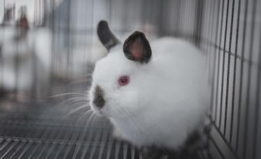 """Illustration : """"Combien coûte un lapin et où l'acheter ?"""""""