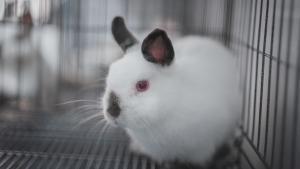 Illustration : Combien coûte un lapin et où l'acheter ?